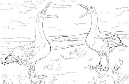 albatros ara dibujar