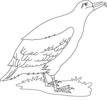albatros para colorear