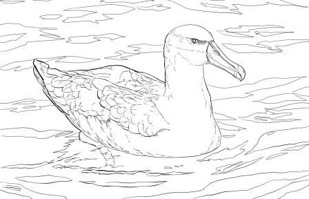 dibujo de albatros para colorear